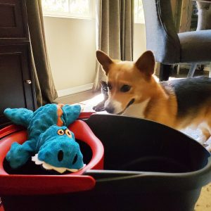 Digby-inspecting-ocedar-spin-mop-and-bucket-for-catapulting