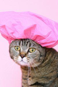cat-in-the-hat-shower-cap