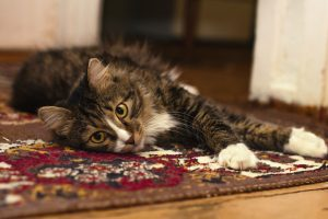Carpet-Cleaning-Spring-Cleaning-Pets