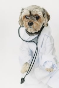 Make-sure-to-schedule-for-your-pets-vaccination-and-annual-exam