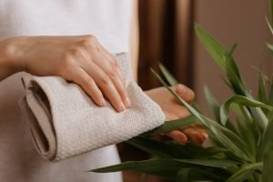 clean-plants-and-artificial-plants-during-spring-cleaning-office