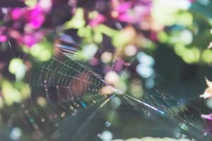 clean-up-cobwebs-while-spring-cleaning