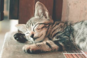 pet-spring-cleaning-chores-sleeping cat