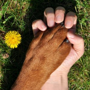 A human hand holding a dog's paw
