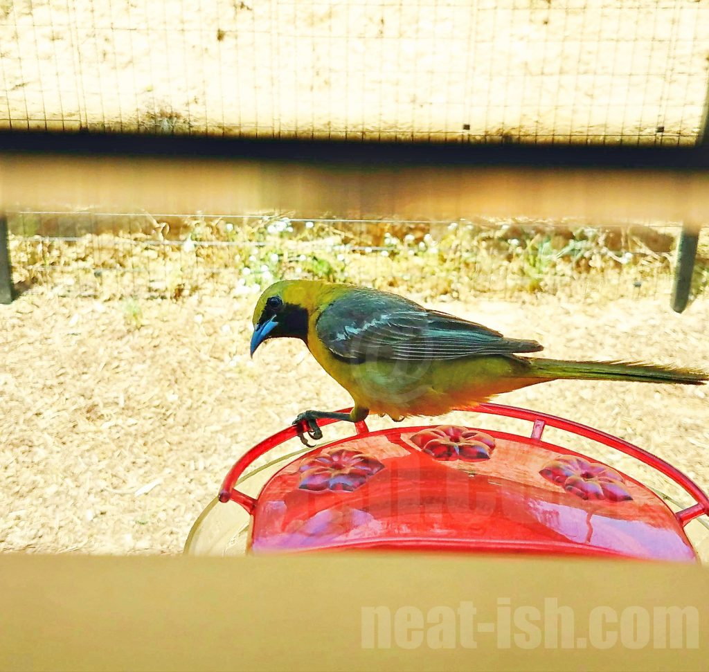 spring-clean-your-bird-feeders-and-bird-houses